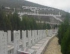 墓地中的风水宝地