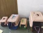 汕头地区宠物猫狗托运-空运汽运