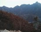 青龙花厂峪村 荒山150亩岀租出兑