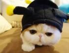 乌鲁木齐哪里有加菲猫卖 自家繁殖 品相极佳 多只可挑