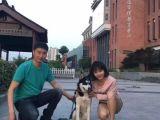 無錫寵物訓練培訓 訓犬訓狗寵物犬糾正學校