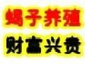 盛丰王蝎养殖加盟