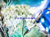 西安婚庆公司,西安礼仪庆典公司,南郊鹏远婚庆