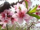 上海农家乐旅游推荐 采草莓赏桃花 钓鱼钓大闸蟹 游滴水湖