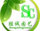 胜诚园艺--专业植物租赁,花木出租,绿植租摆养护!