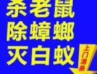 南京神捕 专业除虫除蚁 灭老鼠 灭蟑螂 灭白蚁 抓老鼠除四害