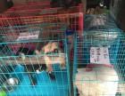 桂林到全国宠物空运,随机托运 检疫证代办 火车托运全国连锁