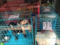 郑州到全国宠物空运,随机托运 检疫证代办 火车托运全国连锁