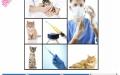 嘉宝猫舍出售—精品猫咪品种齐全可加微信视频挑选
