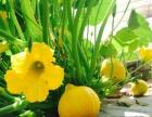 康瑞现代农业让你放心的绿色蔬菜产地