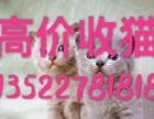 鞍山高价收猫 面向全国批发零售 一手货源