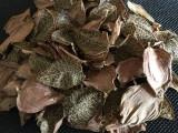 【红宝山】国内最大金线莲供应商纯金线莲叶子 一级金线莲茶批发