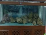 河南郑州观赏鱼缸维护、换水、定制、养护