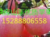 早熟红富士苹果价格 山东红富士苹果最新价格