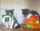 杭州哪里有宠物店 杭州哪里卖宠物猫便宜 杭州蓝猫价格