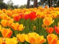 【石象湖风景区】成都跟团到石象湖观赏郁金香1日游