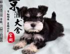 北京最好的狗场是哪家