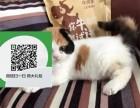 济南在哪里卖健康纯种宠物猫 济南哪里出售折耳猫
