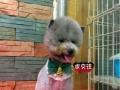 三亚乐趣宠物专业宠物洗澡 美容