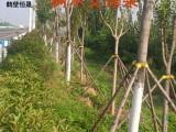 树木支撑套 树木支撑架 树木支撑器