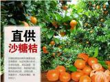 桂林聚缘农场沙糖桔果树认养,体验采摘乐趣田园生活