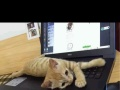猫咪寄养猫寄养宠物寄养