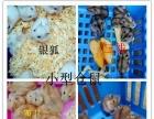 宠物用品饲料猫砂猫粮兔粮提摩西苜蓿干草饮水器笼子