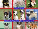 佛山宠物市场地址 在哪里有狗狗买 宠物狗市场价格多少