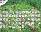 山中兔木炭火锅扫一扫微信公众号