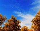 轮台沙漠胡杨林、罗布人村寨、库车、吐鲁番天池8日