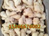 较近哪里生姜价格便宜山东生姜供应价格