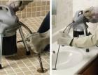 专业疏通下水道 马桶疏通 水龙头水管维修