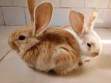 自己家养的宠物兔
