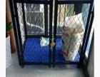 99成新中大型犬狗笼子