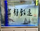 超白鱼缸,金龙鱼,印尼虎出售