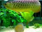 专业鱼缸清洗维护业务