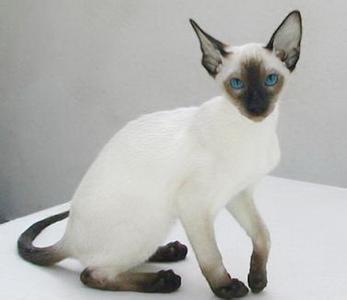一只非常可爱的小猫