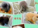 荷兰猪兔子仓鼠刺猬,15至179元