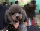 桂林大嘴狗宠物医院