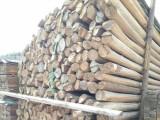 供應河北唐山杉木桿,6米到9米高壓防護沙松桿,竹竿