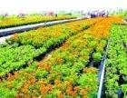 大量出售园艺绿植各种花木