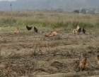 出租永登大同镇大片土地,适合农业种植养殖