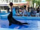 动物世界活体企鹅海狮杂技