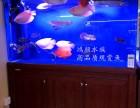 无锡观赏鱼价格热带鱼送货上门