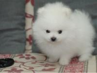 福州官方认证宠物领养中心 多品种狗狗赠送