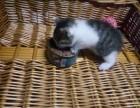 非常可爱小猫咪