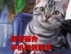 惠州哪里有卖渐层猫小猫多少钱一只惠州美国短毛猫价格美短好养吗