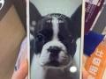 低价出售iPhone6plus