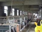新安 磁间镇 养殖场3000平米 低价出租