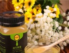甘蜜园天然成熟蜜 活性高酶蜜